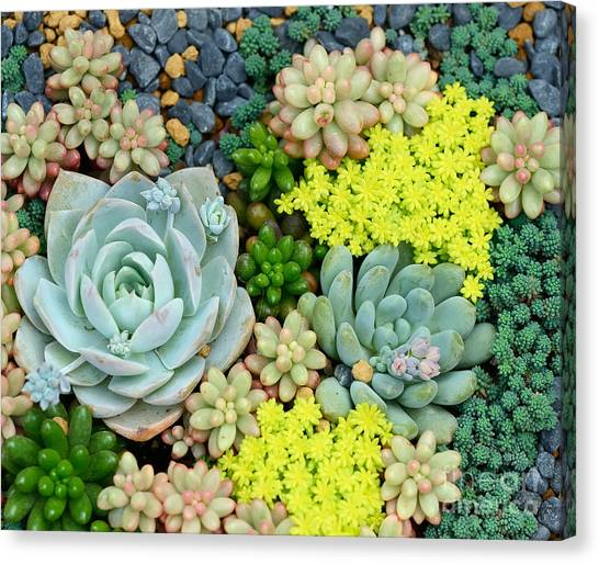 Perennial Canvas Print - Miniature Succulent Plants by Asharkyu