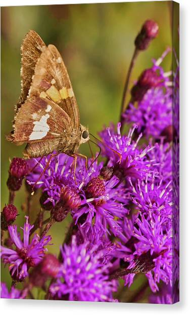Moth On Purple Flowers Canvas Print