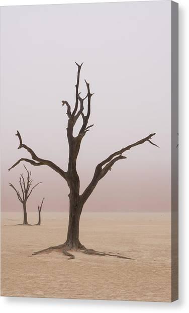 Namibia Fog Shrouds The Dead Acacia Canvas Print by Brenda Tharp