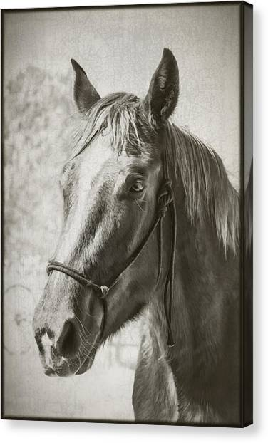 Canvas Print featuring the photograph Old West Transportation by Elaine Malott