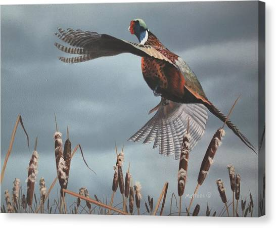 Out Of The Cattails Canvas Print