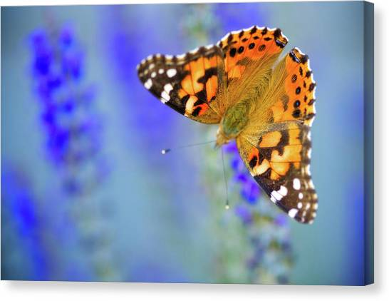 Canvas Print featuring the photograph Painted Lady Butterfly by Nicole Young