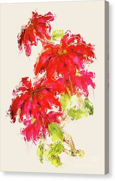 Canvas Print - Poinsettia by Amanda Lakey