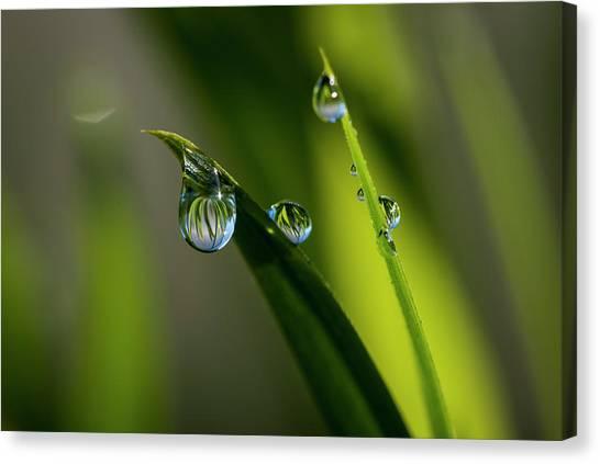 Rain Drops On Grass Canvas Print