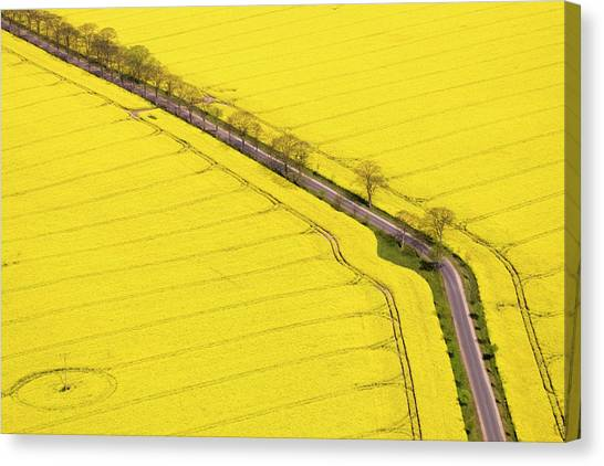 Rape Field Photographed From The Air Canvas Print by Willi Rolfes