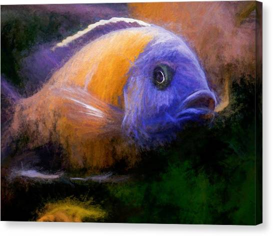 Red Fin Borleyi Cichlid Canvas Print