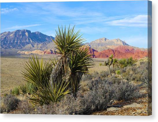 Red Rock Canyon National Conservation Area Canvas Print