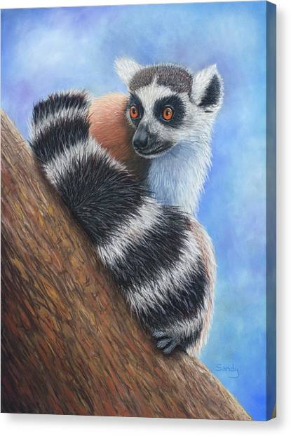 Ring-tailed Lemur Canvas Print - Eyes Wide Open by Sandra O'Steen Art