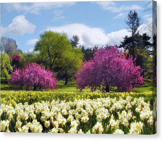 Spring Fever Canvas Print
