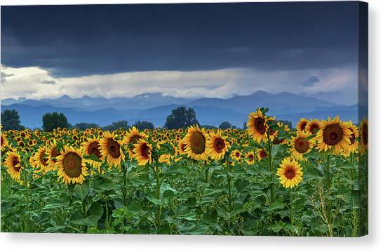 Canvas Print featuring the photograph Sunflowers Under A Stormy Sky by John De Bord