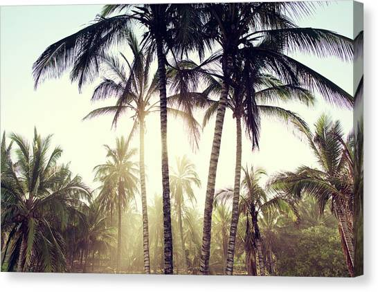 Canvas Print featuring the photograph Ticla Palms by Nik West