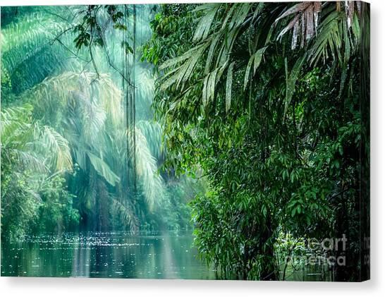 South American Canvas Print - Tortuguero National Park, Rainforest by Ronnybas Frimages