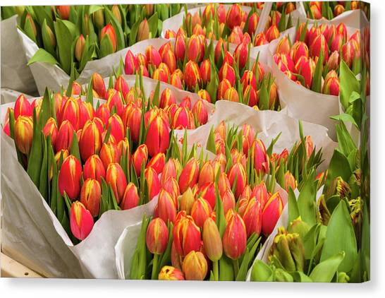 223461bc846e Markets Canvas Print - Tulips For Sale At A Flower Market by P A Thompson