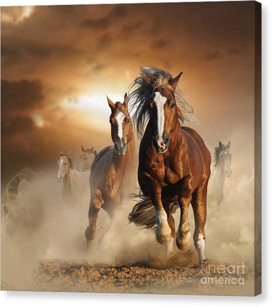 Purebred Canvas Print - Two Wild Chestnut Horses Running by Mariait