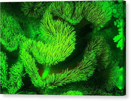 Underwater Sea Life Near Airport Canvas Print by Stuart Westmorland
