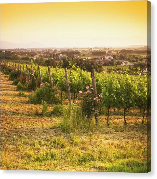 Sonoma Valley Canvas Print - Vineyard On Chianti Region Hills - Italy by Franckreporter