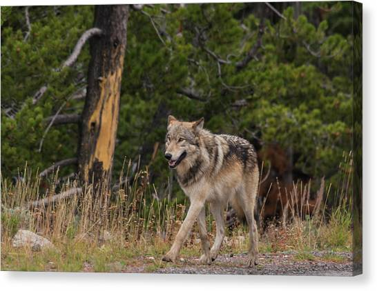 Canvas Print featuring the photograph W1 by Joshua Able's Wildlife