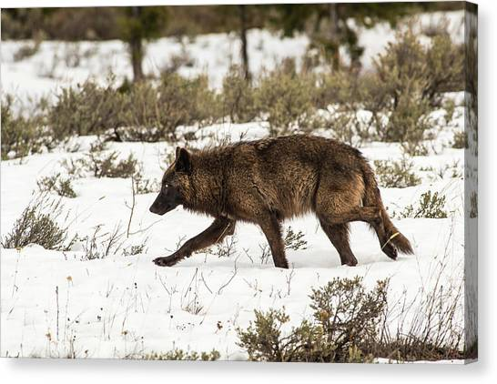 Canvas Print featuring the photograph W10 by Joshua Able's Wildlife