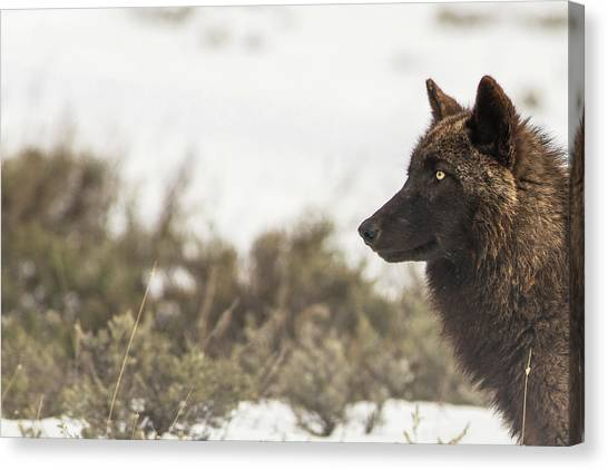 Canvas Print featuring the photograph W15 by Joshua Able's Wildlife