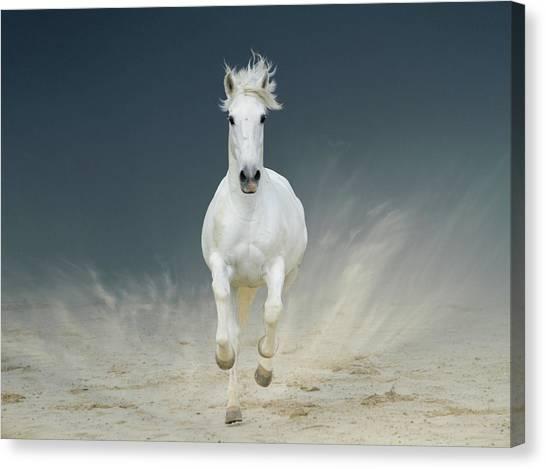White Horse Galloping Canvas Print by Christiana Stawski