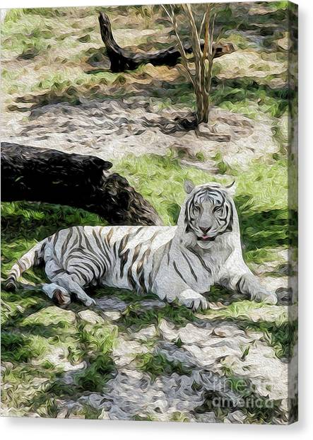 White Tiger At Rest Canvas Print