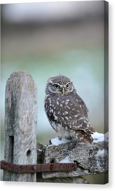 Wildlife Photography - Gloucester Barn Canvas Print