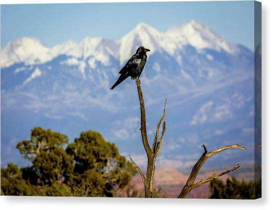 Canvas Print featuring the photograph Winter Is Coming by David Morefield