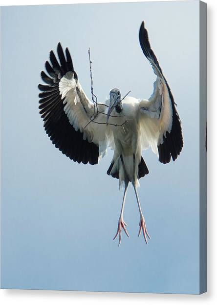Woodstork Nesting Canvas Print