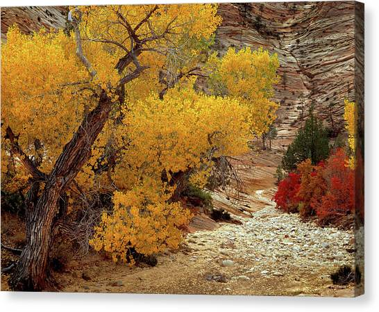 Zion National Park Autumn Canvas Print