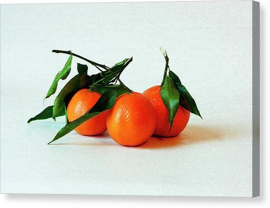 11--01-13 Studio. 3 Clementines Canvas Print