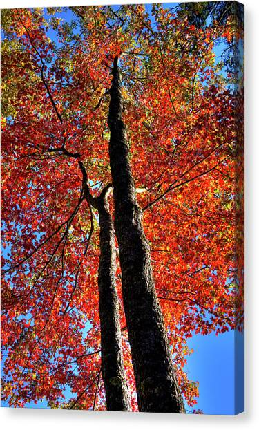Canvas Print featuring the photograph Autumn Reds by David Patterson