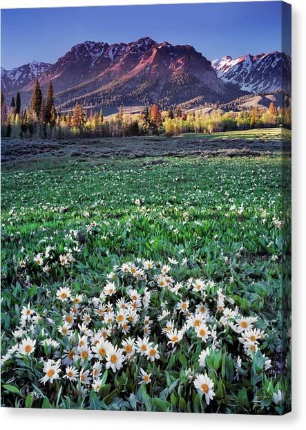Altitude Canvas Print - Boulder Mountains by Leland D Howard
