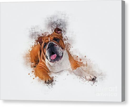 Bulldog Canvas Print