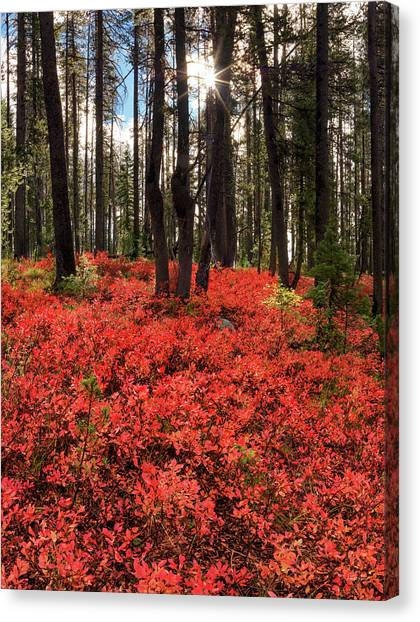 Boise National Forest Canvas Print - Forest Of Red by Leland D Howard
