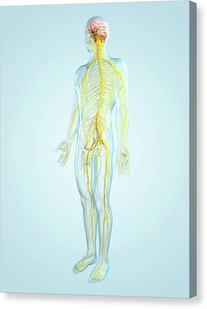 Nervous System, Artwork Canvas Print by Sciepro