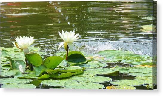 2 White Water Lilies Canvas Print