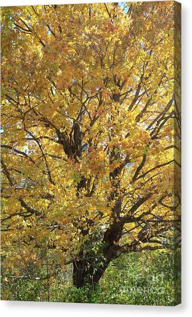 2018 Edna's Tree Up Close Canvas Print