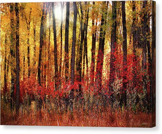 Autumn Light Canvas Print by Leland D Howard