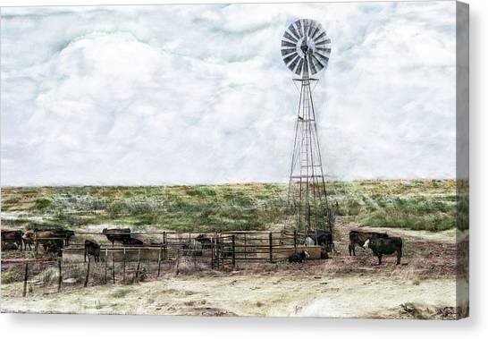 Classic Cattle II Canvas Print
