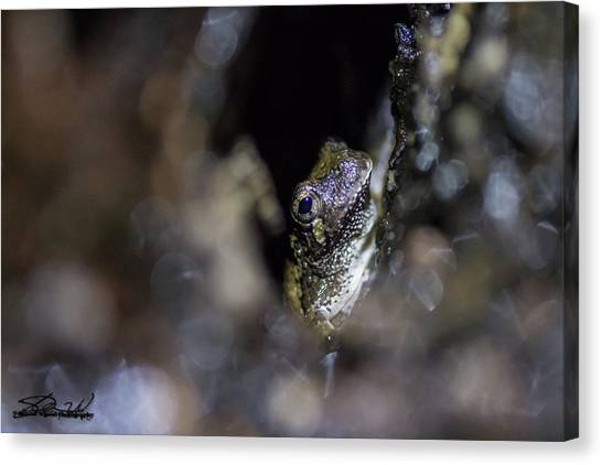 Grey Tree Frog Canvas Print