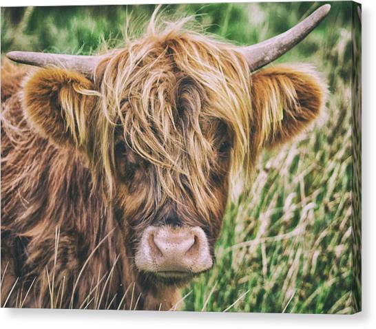 Yak Canvas Print - Highland Cow by Martin Newman