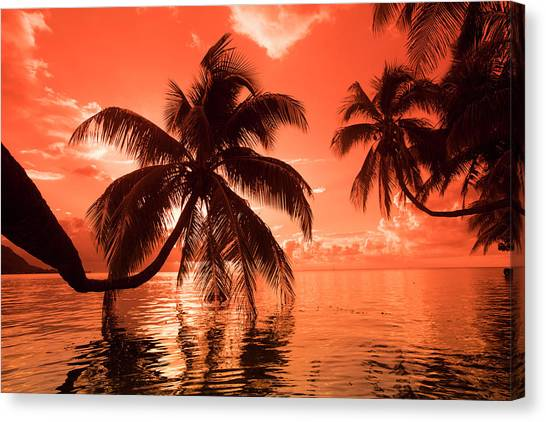 Canvas Print - Palm Trees At Sunset, Moorea, Tahiti by Panoramic Images