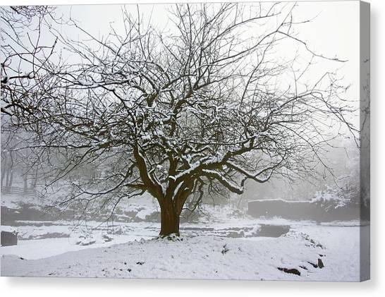 30/01/19  Rivington.  Japanese Pool. Snow Clad Tree. Canvas Print