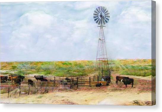 Classic Cattle  Canvas Print