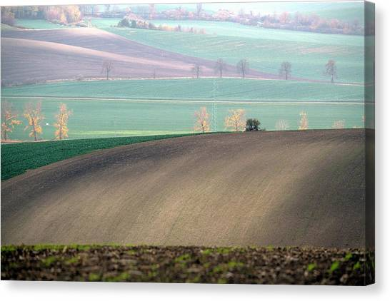Autumn In South Moravia 5 Canvas Print