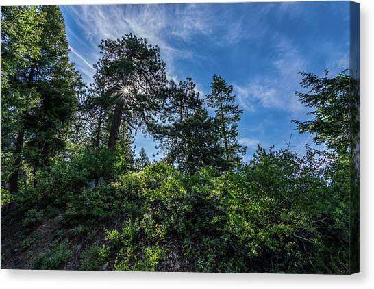 Boise National Forest Canvas Print - 48ls  Mystic Tree by Mike Johnston