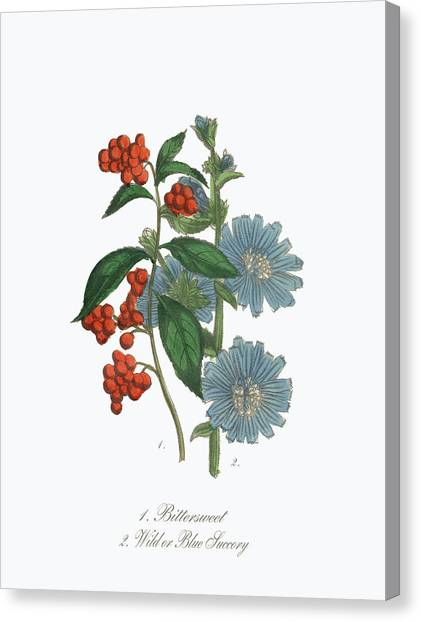 Printmaking Canvas Print - Victorian Botanical Illustration Of by Bauhaus1000