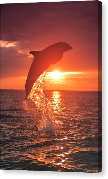 Bottlenose Dolphins, Caribbean Sea Canvas Print by Stuart Westmorland