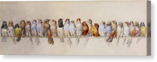 A Perch Of Birds  Canvas Print