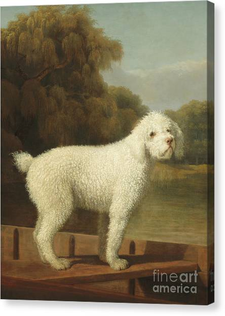 Poodles Canvas Print - White Poodle In A Punt by George Stubbs